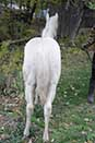 Shiney Show Lady by Twice As Shiney out of Shining Spark and Dunit Show Lady by Hollywood Dun It